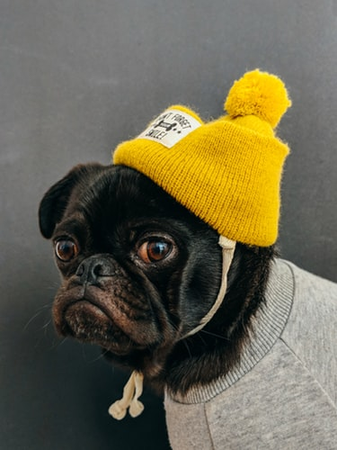 dog and the yellow color